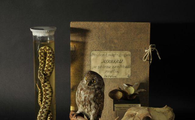 Iz zbirke Prirodoslovnega muzeja. Foto Ciril Mlinar Cic