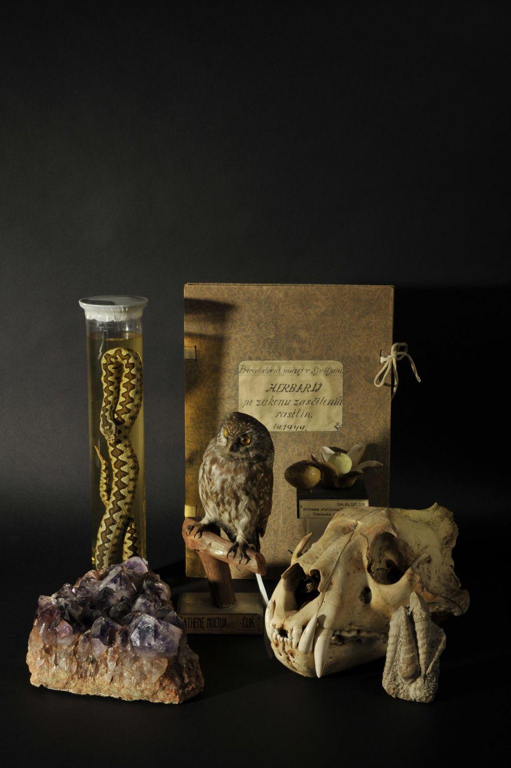 FOTO:»Če zbirka propada, tega nihče ne izreče, prenevarno je. Muzeji preživijo s skrivanjem«