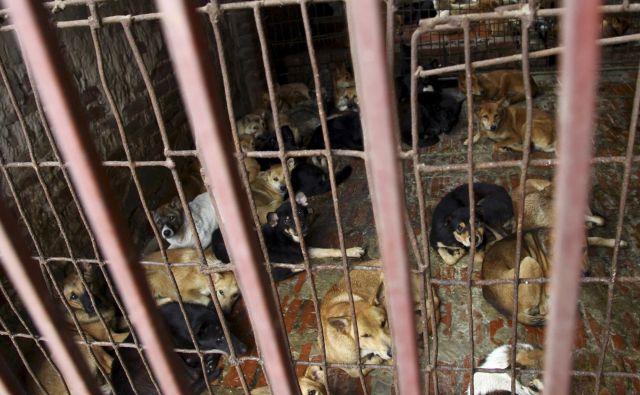 V zadnjih letih so opazili, da uporaba pasjega in mačjega mesa upada, vendar gre še vedno za tradicijo, ki je zelo vpeta v vietnamsko kulturo. FOTO: AP