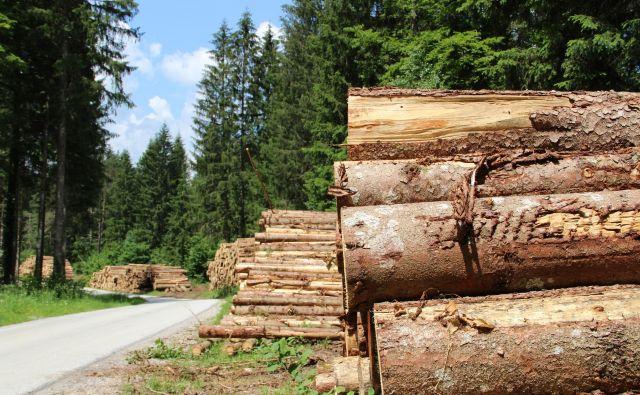 V kočevskih gozdovih, ki so večinoma v državni lasti, so številne skladovnice hlodov in poseke. Foto Simona Fajfar