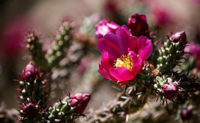 Čudoviti cvet<br /> FOTO: Reuters