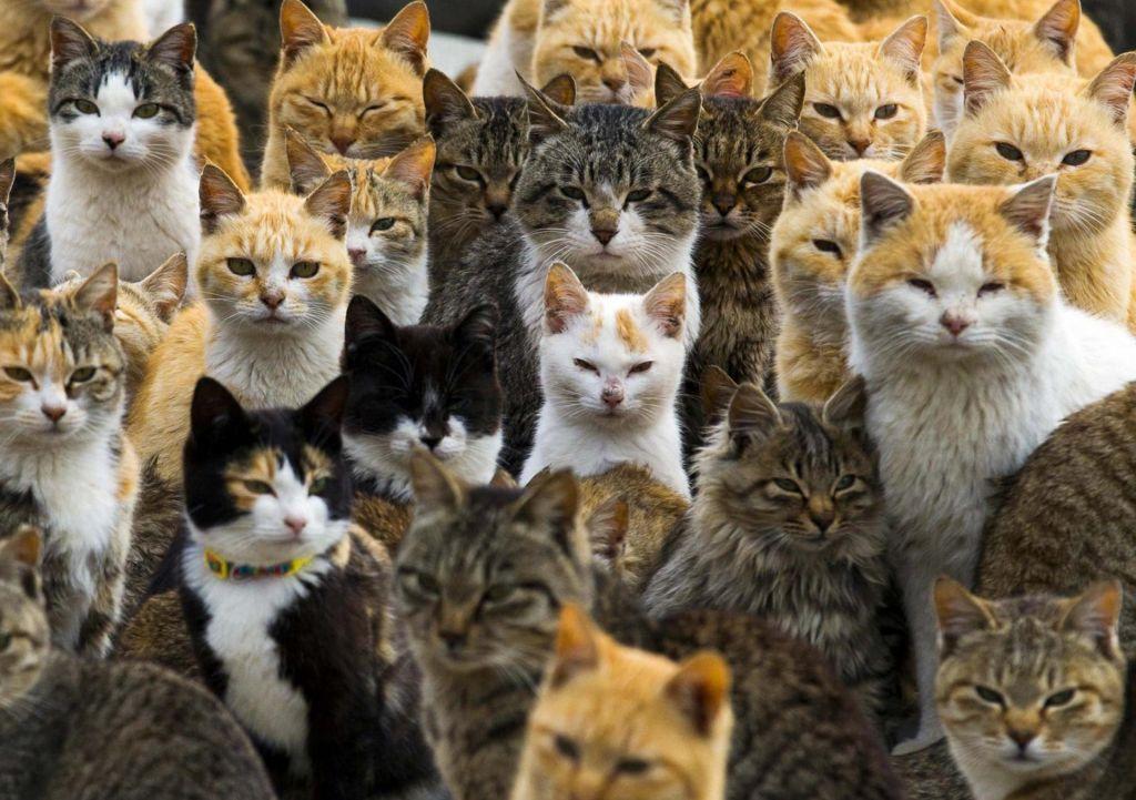 FOTO:Parazit, ki vas prepriča, da vzljubite mačke