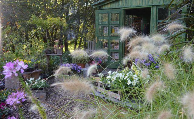 Jesen na naši vrtnariji. Spokojno, pomirjajoče. Foto: Jerneja Jošar