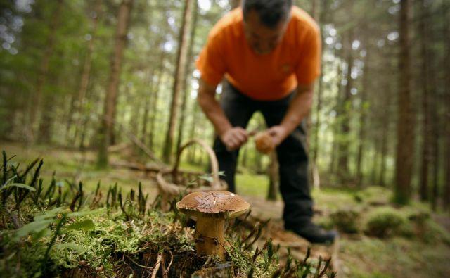 Slovenske gozdove so v zadnjih dneh okupirali nabiralci gob. FOTO: Uroš Hočevar