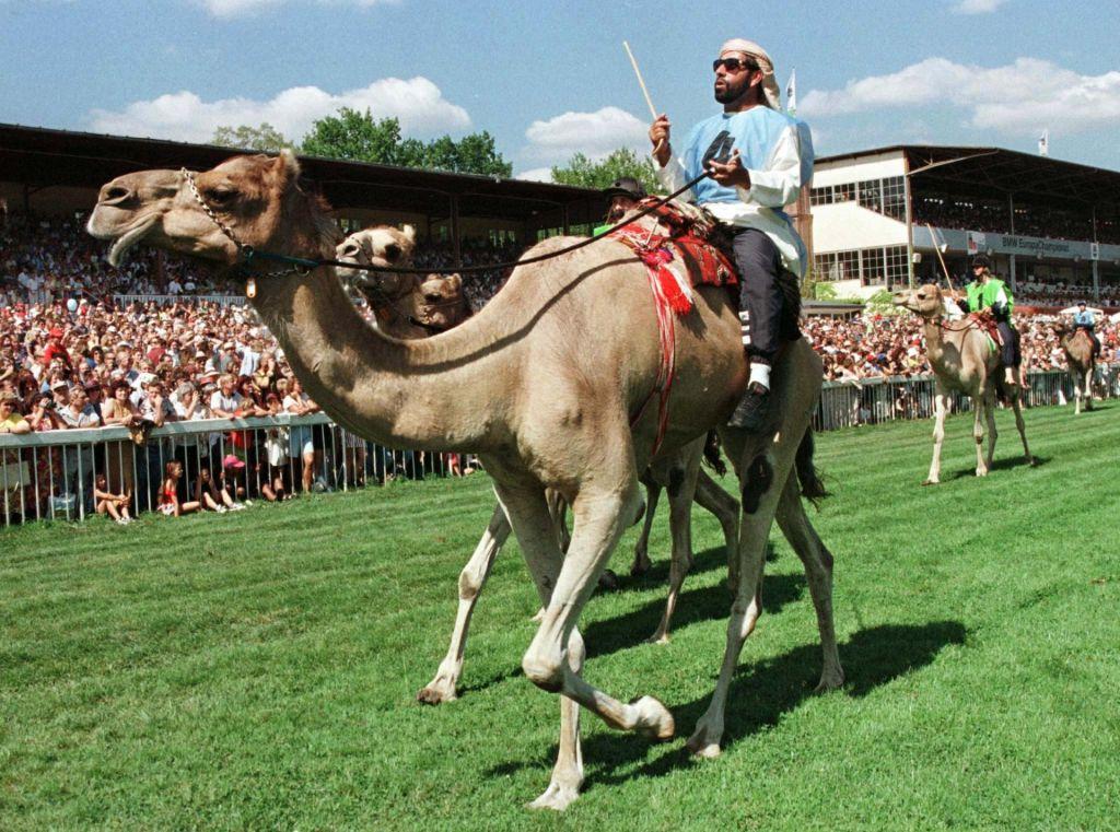 FOTO:Hrano za kraljeve kamele in druge nišne izdelke lahko prodajamo po celem svetu