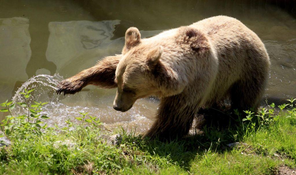 FOTO:Dve novi medvedki iz Slovenije v Francijo