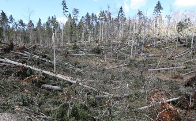 Vetrolom je lani podrl za 2,6 milijona kubičnih metrov dreves. FOTO: Tomi Lombar/Delo