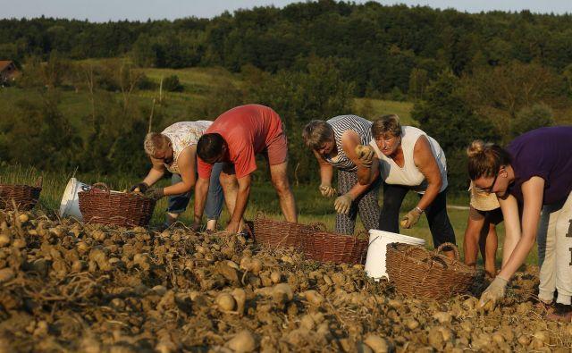 Pridne roke potrebuje tudi kmetijstvo. FOTO Bla�ž Samec/Delo