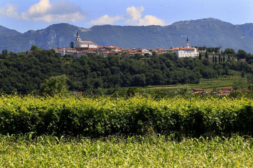 FOTO:Vipavska dolina – vzhajajoča zvezda