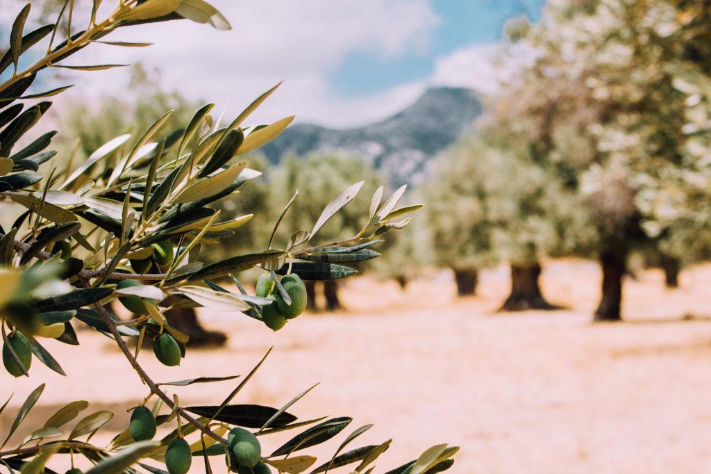 FOTO:Mediteranska prehrana za rekreativne športnike