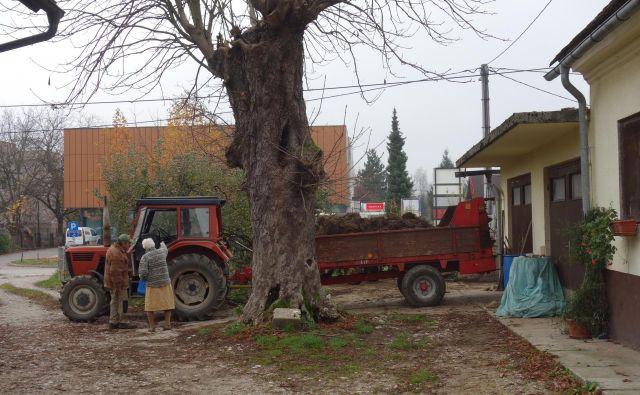Jože Jerinc pred eno zadnjih voženj hlevskega gnoja FOTO Lovro Kastelic