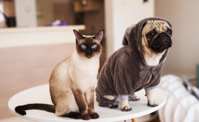Psi in mačke so lahko tudi prijatelji. FOTO: Shutterstock