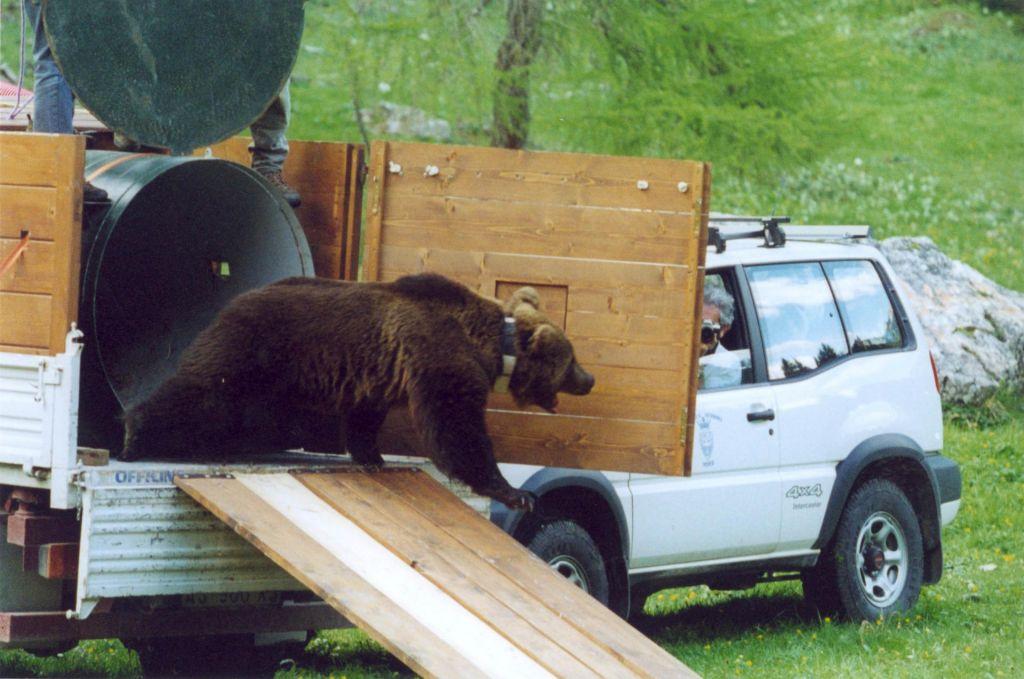FOTO:Slovenija je največja izvoznica medvedov v Evropi