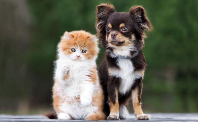 Pasji in mačji mladiči so zelo radovedni. Foto: Shutterstock