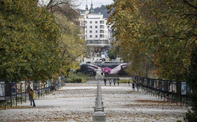 Jakopičevo sprehajališče v Tivoliju je priljubljeno med mladimi in starimi. Naravni park sredi mesta je oaza za sprostitev in rekreacijo. FOTO: Uroš Hočevar