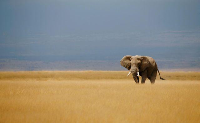 Človeška dejavnost povzroča izgubo habitatov. FOTO: Reuters