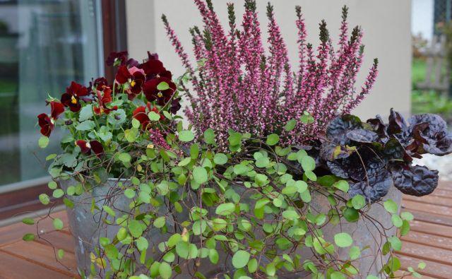 Da bo vrt pripravljen na pomlad. Foto: Jerneja Jošar