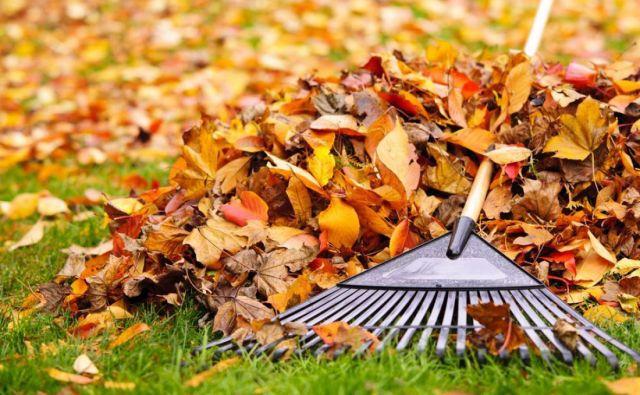 Načeloma je november v vrtu najbolj priporočljiv čas za opravila, od katerih pričakujemo dolgoročni učinek. Foto: Shutterstock