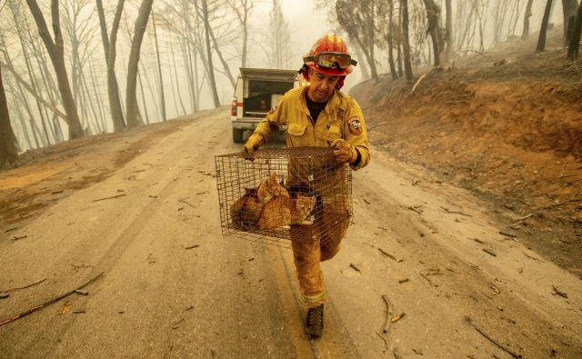 Evakuirali so okrog 250.000 ljudi in ogromno domačih živali. FOTO: Noah Berger/Ap