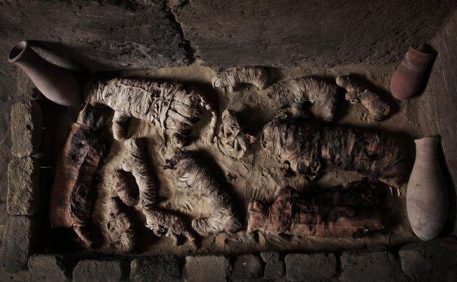 Mumificirane mačke v Sakari. FOTO: Ap