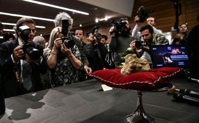 Na 19. svetovni dražbi belih tartufov v severnoitaljanskem mestu Alba, je največ pozornosti požel 850 gramski lepotec. Le tega so prodali honkonškem kupcu, ki je zanj odštel vrtoglavih 85.000 evrov. V albi poteka sejem tartufov že 88. leto in traja skoraj dva meseca.Foto Marco Bertorello Afp