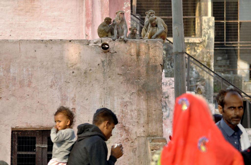 Opica iz rok doječe matere iztrgala 12 dni starega fantka in ga pogrizla do smrti