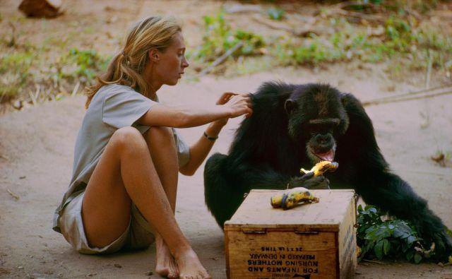 Jane Goodall - primatologinja. Foto Rtv Slo