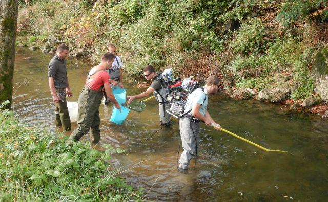 Iz Vipave in pritokov so odstranili več sto kilogramov donavske podusti. Foto Zavod za Ribištvo Slovenije