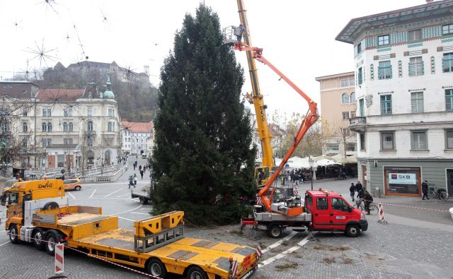 Na Prešernovem trgu so že postavili novoletno jelko, ki bo konec meseca zažarela ob prižigu lučk v celotni prestolnici. Foto Mavric Pivk