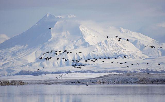Do zdaj zaščitena divjina na severnem robu Aljaske postaja nov vir ameriške nafte. Foto Reuters