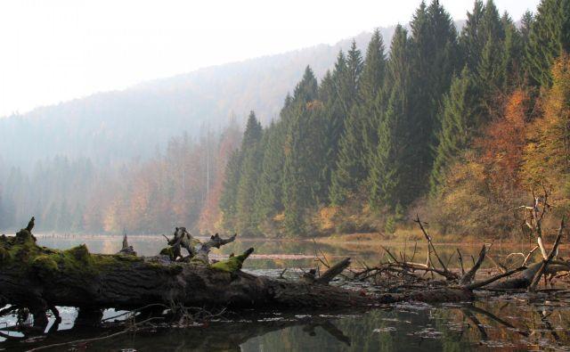 Ob Reškem jezeru gnezdi orel belorepec. Foto Simona Fajfar