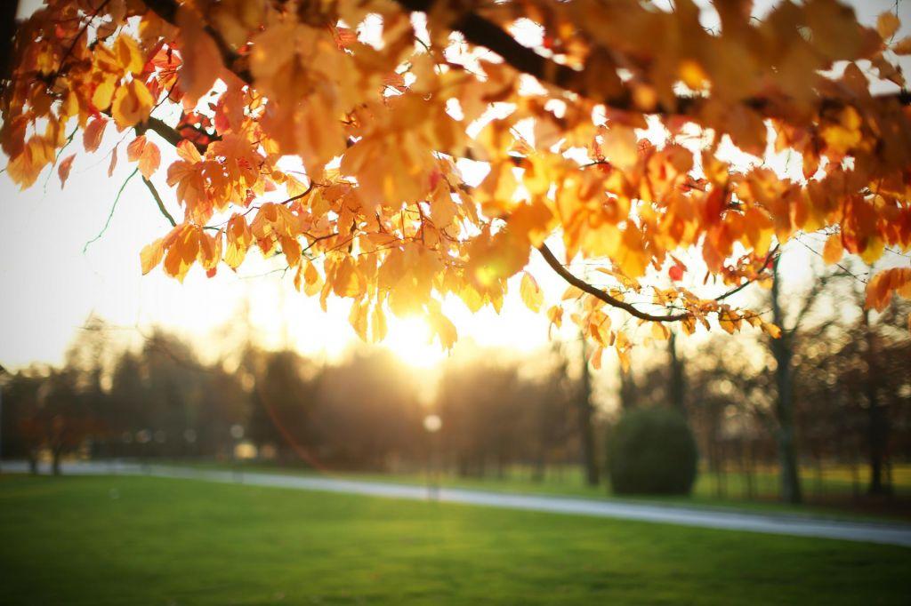 Letošnja jesen za okoli dve stopinji Celzija toplejša od povprečja