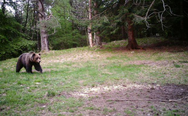 Medveda Elisia je na slovenskih tleh doletela tragična usoda. FOTO: Elisio Da Pozzo