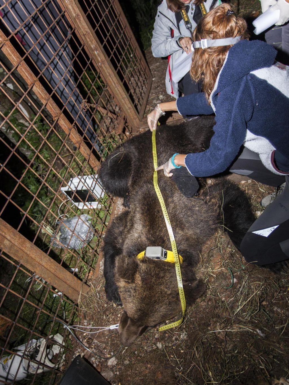 FOTO:»Smrt takšnega medveda spremlja veliko čustev«