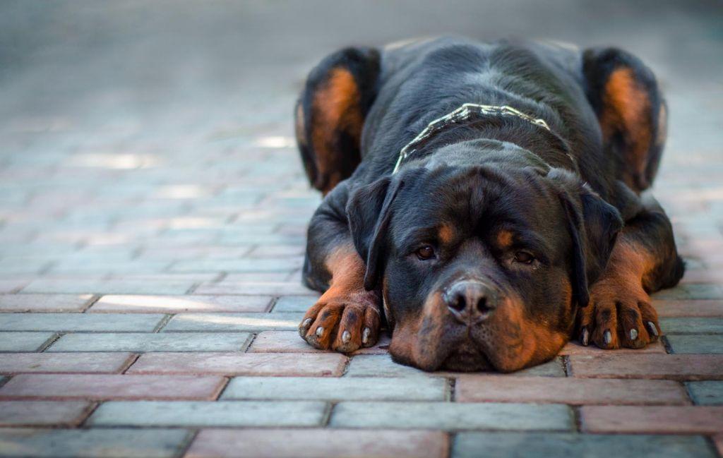 Mučil psa: brez vode ju je pustil več dni
