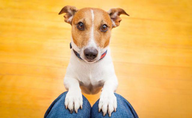 Psi so izredno navezani na svoje lastnike. Foto: Shutterstock