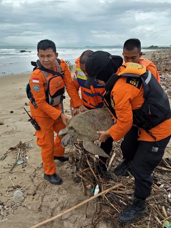 Nov cunamibi lahko izbrisal vrsto nosorogov