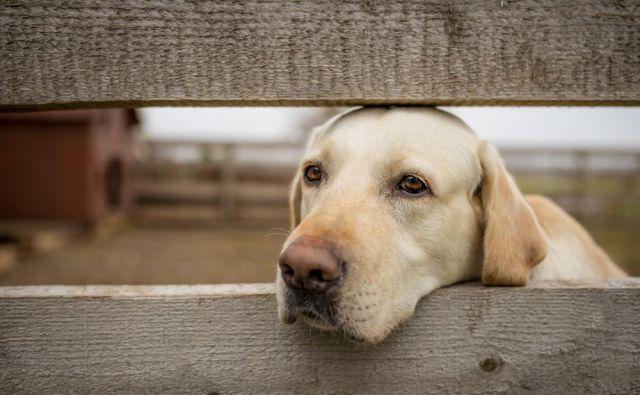 Tudi psi so lahko depresivni. FOTO: Shutterstock