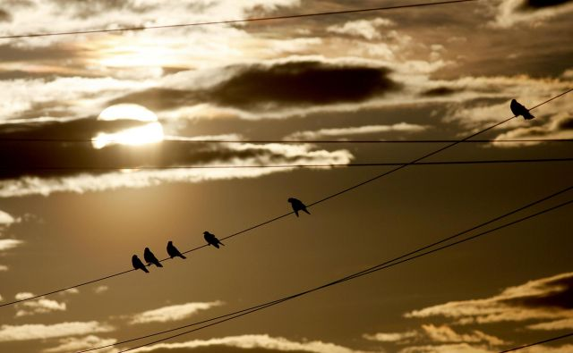 Svetli del dneva je neizčrpen vir navdiha. FOTO: Mavric Pivk