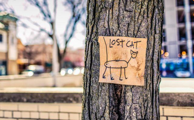 Lastniki štirinožca so bili presenečeni, ko so decembra prejeli klic iz okoli 1600 kilometrov oddaljenega mesta, poročajo ameriški mediji. FOTO: Shutterstock