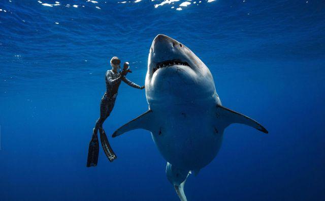 Potapljačica Ramsey plava ob velikem belem morskem psu ob obali Oahuja na Havajih. Veliki beli morski psi so izjemno redki na Havajih in ta primerek je eden največjih zabeleženih na tem območju. Populacija morskih psov okoli Havajev upada in ni zakonov, ki bi ščitili morske pse, ki jih lovijo zaradi plavuti. Raziskovalna skupina @OneOceanDiving preučuje vedenje morskih psov in ljudi poučuje, kako se izogniti neugodnim interakcijam. Njihova raziskava in delo sta namenjena zmanjševanju smrtnih žrtev, povezanih z morskimi psi, in izobraževanju drugih o pomenu morskih psov. Foto @juansharks/juan Oliphant Afp