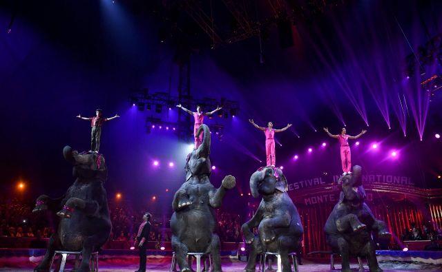 Družina Gartner se specializira na nastope s sloni. FOTO: Yann Coatsaliou/AFP