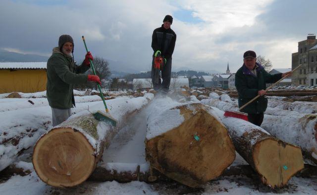 Organizatorji licitacije se trudijo, da bo butična slovenska hlodovina kupce pričakala očiščena snega. FOTO: Mateja Kotnik