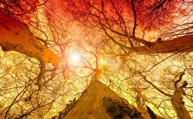 narava Foto Shutterstock