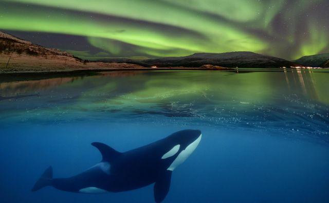 Ena izmed fotografij, ki bodo na ogled na festivalu <em>Sprehodi pod morjem</em>. FOTO: Wolfgang Pölzer