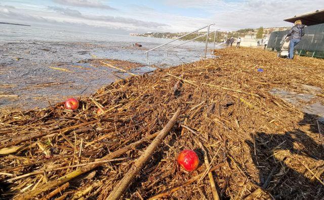 Poplava vejevja in kmetijskih odpadkov iz doline Dragonje v morju. FOTO: Boris Šuligoj