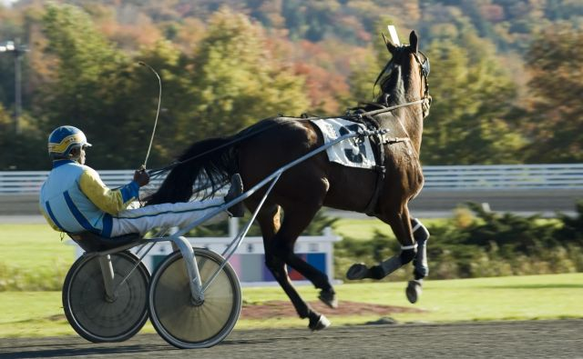 V lanski sezoni je po podatkih Kasaške zveze Slovenije pri nas nastopalo 185 tekmovalnih konj. FOTO: Getty Images