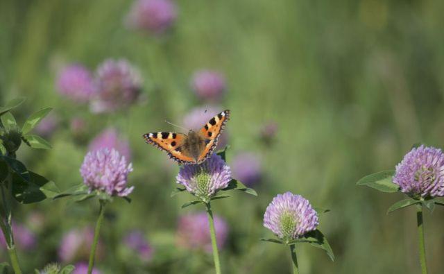Med najbolj prizadetimi so metulji. FOTO: Getty Images/iStockphoto
