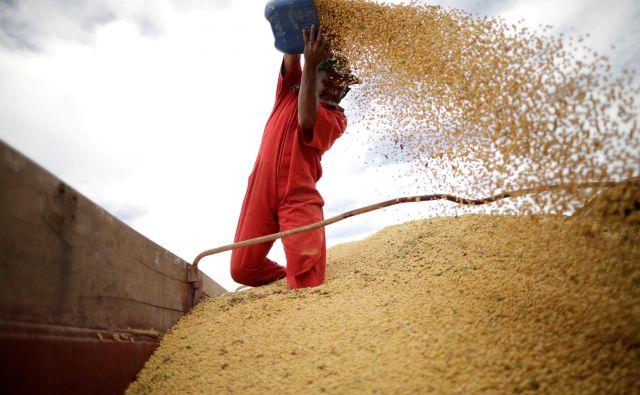 ZDA so izrinile Brazilijo kot največjo dobaviteljico soje Evropski uniji.FOTO: Reuters