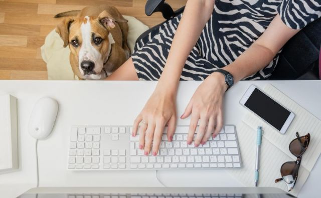 Bi vam bilo všeč, če bi vas vsako jutro v pisarni pozdravil pes? FOTO: Shutterstock